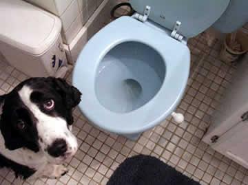Como ensinar meu cachorro a fazer as necessidades no lugar certo?