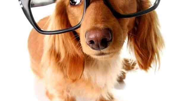 cachorro-oculos-inteligente-petrede