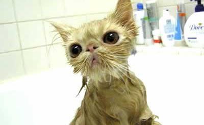 petrede-gato-tomando-banho