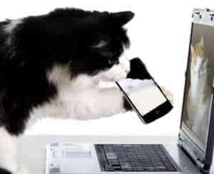gato-iphone-notebook-petrede