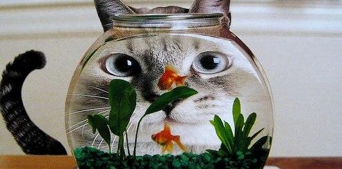 gato-olhando-aquario-petrede