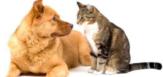 cachorro-e-gato-olhar-petrede