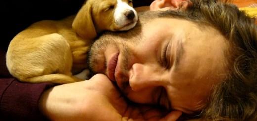 cachorro-filhote-carinho-amor-dormindo-homem-petrede