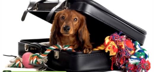 cachorro-viagem-mala-bagagem-ferias