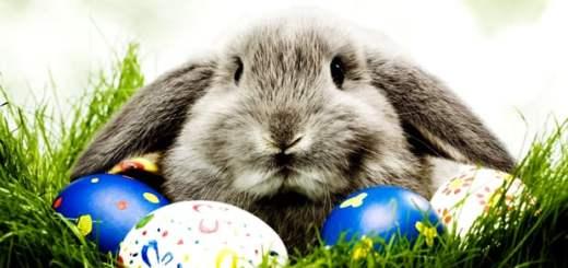 coelho-ovos-pascoa-petrede