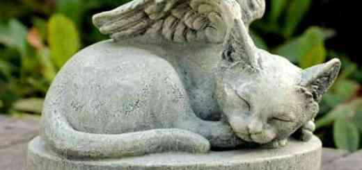 gato-cemiterio-enterro-morte-estatua-anjo-petrede