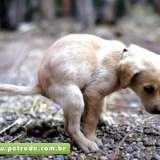 cachorro-coco-fezes-petrede