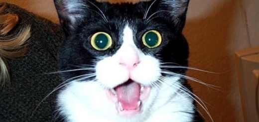 gato-surpreso-espantado-petrede