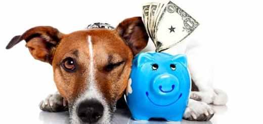 cachorro-dinheiro-valor-petrede