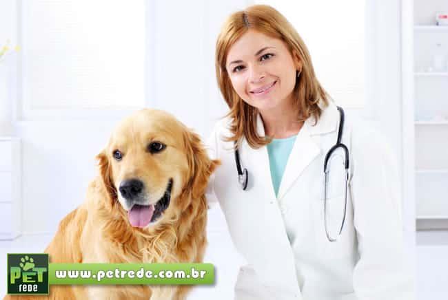 cachorro-labrador-consulta-medico-veterinaria-alegria-feliz-exame-petrede