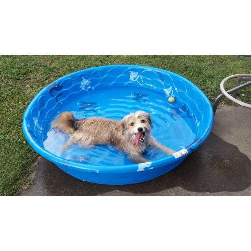 Medium Crop Of How Often Should I Bathe My Dog