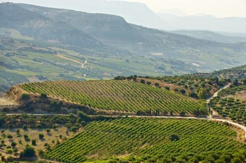 Philosophies Vineyards Crete
