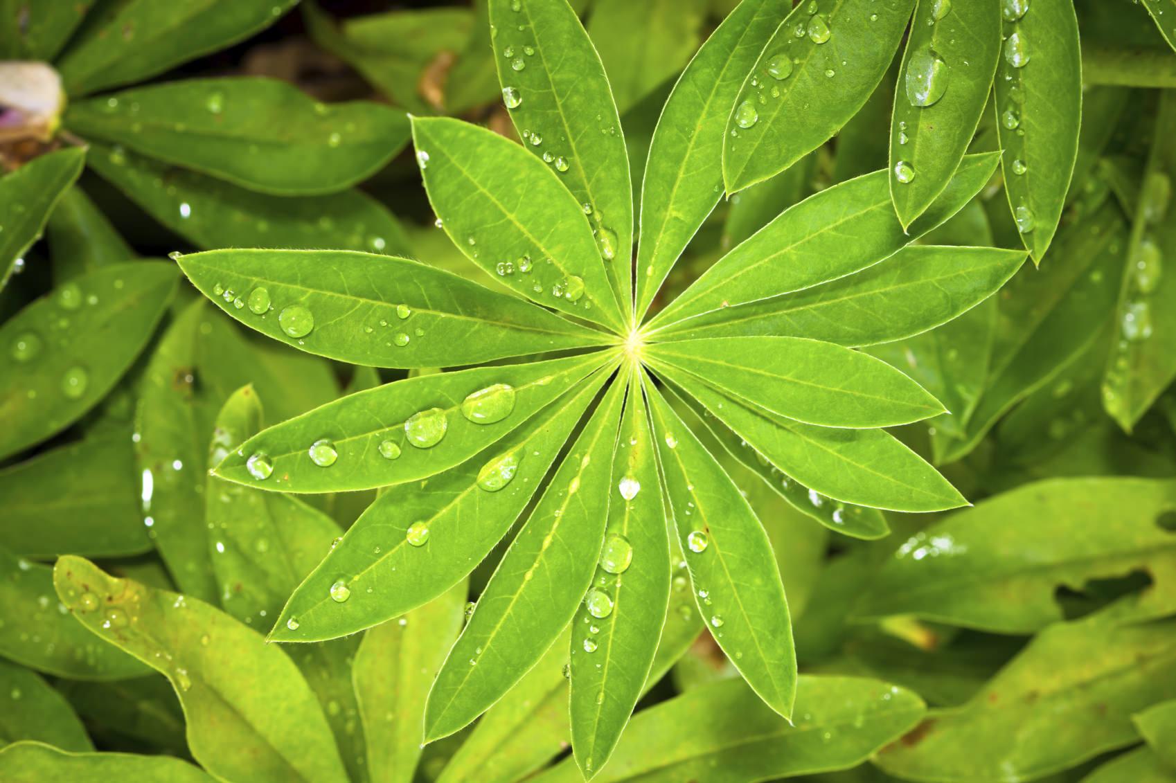 Fotografia Macro: fotografare gocce di pioggia sulle piante