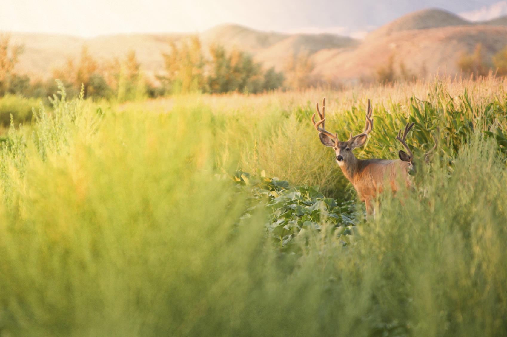 4 suggerimenti per chi inizia a fare fotografia naturalistica