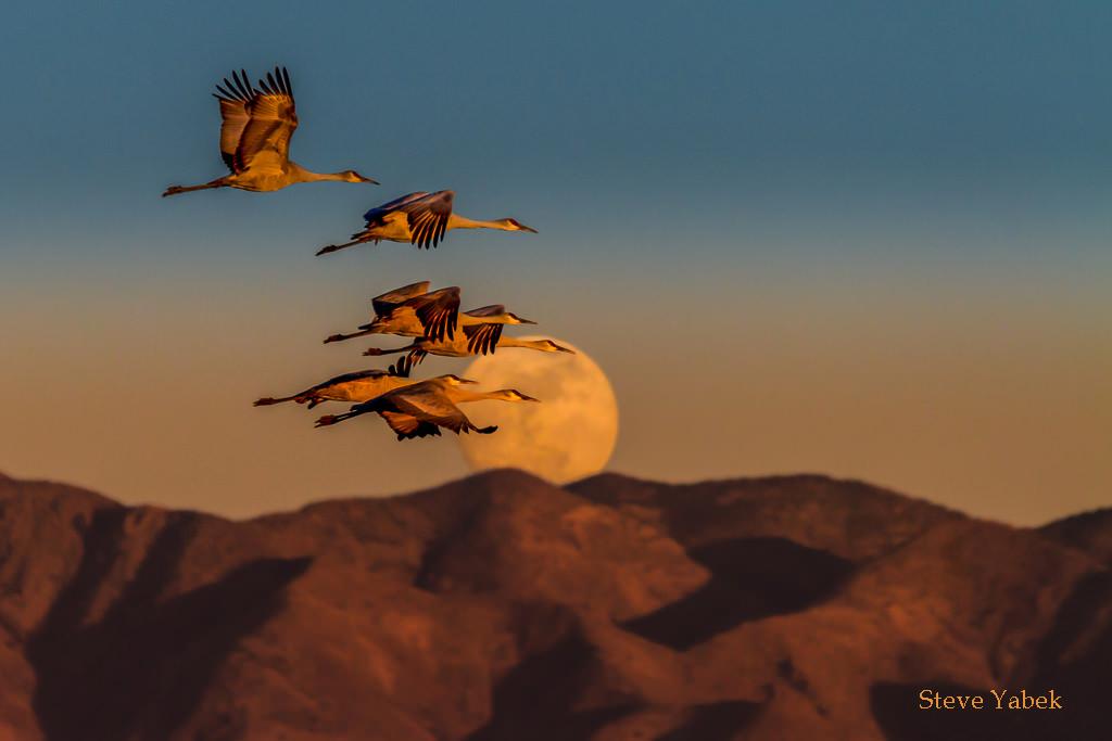 7 consigli per scattare fotografie di uccelli in volo