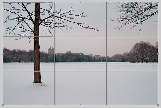 Rule of Thirds Crop Grid Overlay Showing Guide Lines