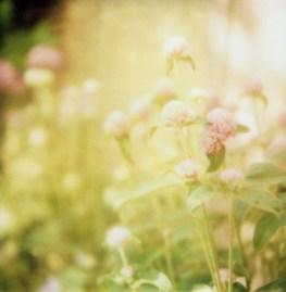 1307-flowers004