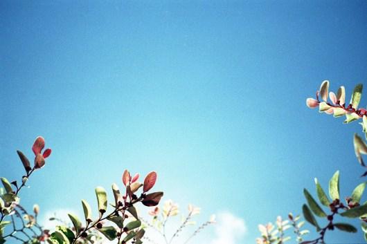 201105hawaii-t3-057