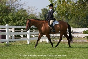 RR3D3139 300x200 Royal K Horse Show bill for open show September 9th 2012