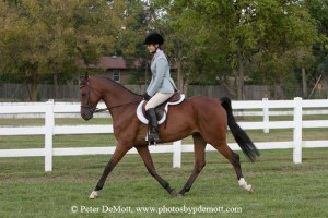 RR3D3710 300x200 Royal K Horse Show bill for open show September 9th 2012