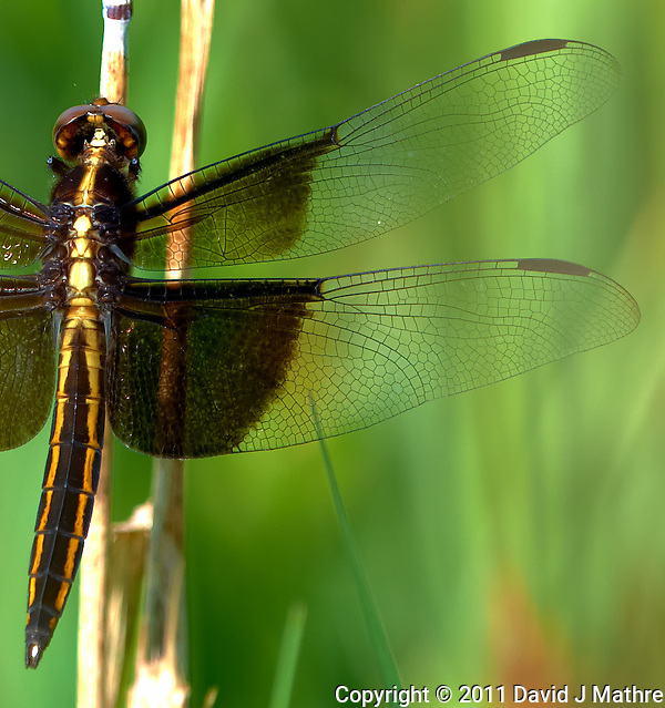 Dragonfly at the Sourland Mountain Reserve.  Image taken with a Nikon D3x and 500 mm  f/4 VR lens (ISO 100, 500 mm, f/4, 1/500 sec). Raw image processed with Capture One Pro, Focus Magic, Nik Define, and Photoshop CS5. (David J Mathre)
