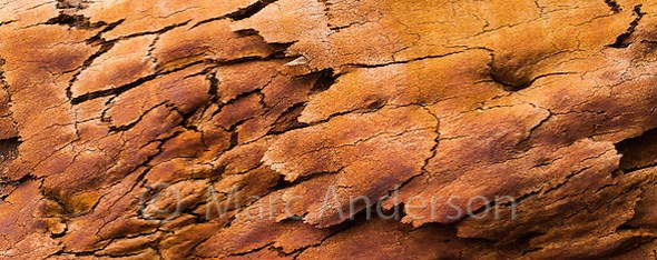 Detail and patterns in burnt bark on an Angophora tree (Angophora costata) scorched by recent bushfires, Wollemi National Park, NSW, Australia (Marc Anderson)