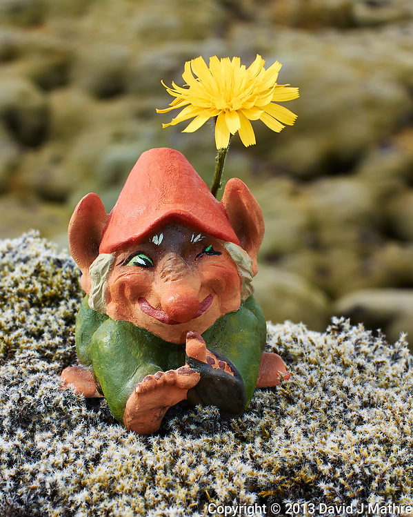 Troll Sunning Itself Under A Dandelion On the Lichen and Moss Covered Eldhraun Lava Field in Southern Iceland. Image taken with a Nikon 1 V2 camera and 32 mm f/1.2 lens (ISO 160, 32 mm, f/8, 1/250 sec). Nikonians Photo Adventure Tour in Iceland with Mike Hagen and Tim Vollmer (David J Mathre)