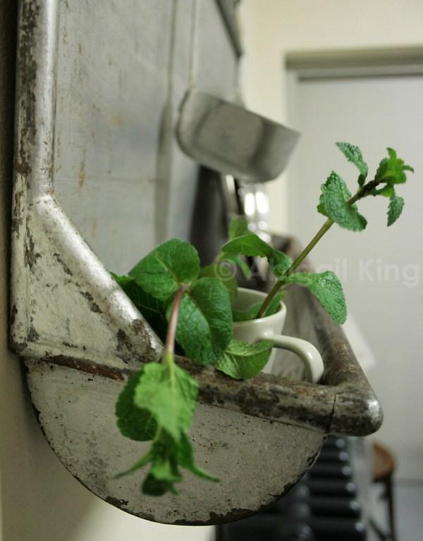 Fresh mint in Casa Gentili