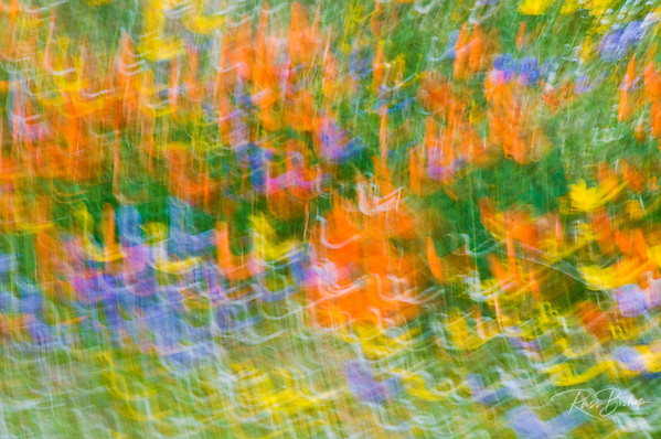 Wildflower abstract, Tehachapi Mountains, Angeles National Forest, California (Russ Bishop/Russ Bishop Photography)