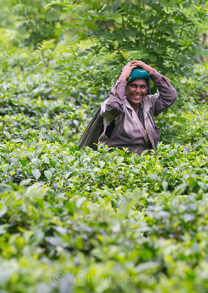 Smiling woman picking tea in a tea plantation, Sri Lanka (Marc Anderson)