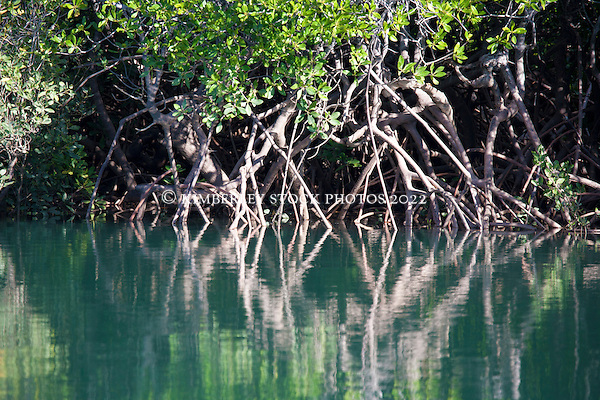 Tangled mangrove roots in Talbot Bay on the Kimberley coast.  The Kimberley has 17 of Western Australia's 27 species of mangroves. (Annabelle Sandes/© Annabelle Sandes | Kimberley Media 2010)
