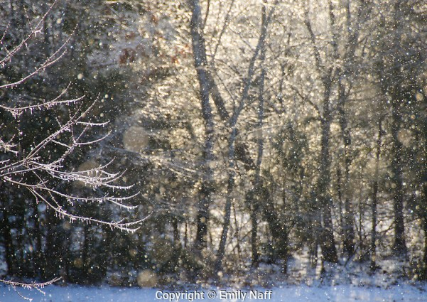 Magic light on a snowy icy morning (Emily Naff)