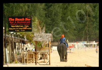 bangtao-elephant