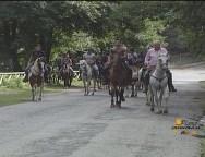 Taurianova, pellegrinaggio a cavallo verso Polsi della Susalfa Selleria