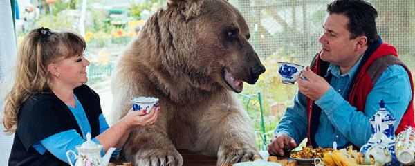 adopted-bear-russian-family-stepan-coverimage2