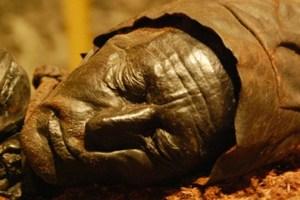 mummia-700x336