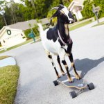 Farthest Distance Skateboarding By A Goat Happie