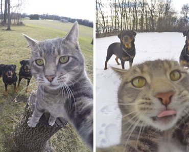 manny-cat-takes-selfies-dogs-gopro-20