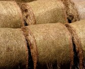Straw prices for the week ending August 2, 2015