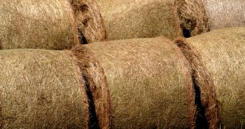 Straw prices for the week ending July 5, 2015