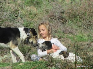 My mates daughter Aria showing Snow some affection, Snow's father Fog looking on.