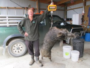 Bill with the 118 pound boar