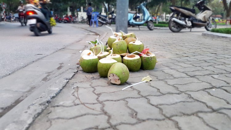 Discarded coconuts
