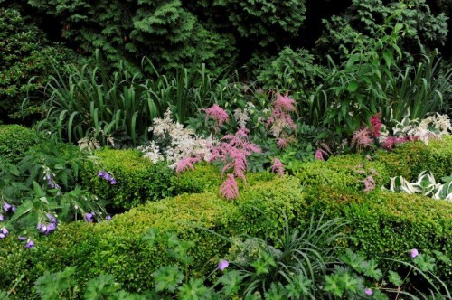 lush garden stacy bass garden photography