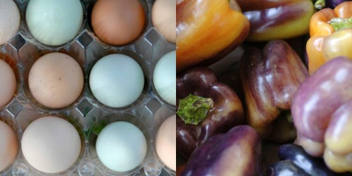 eggs and peppers grow image spread