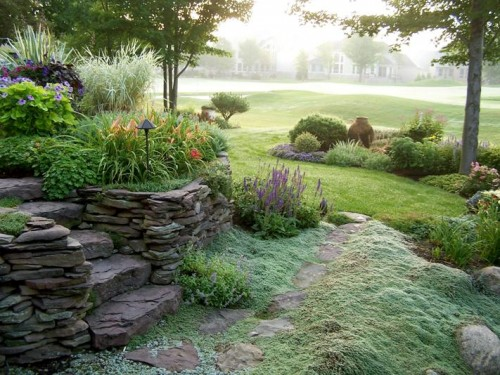 wooly thyme rock garden