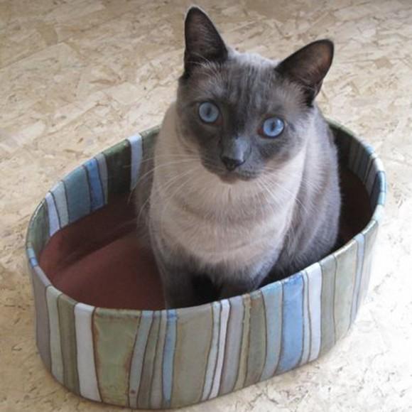 esther studio w cat