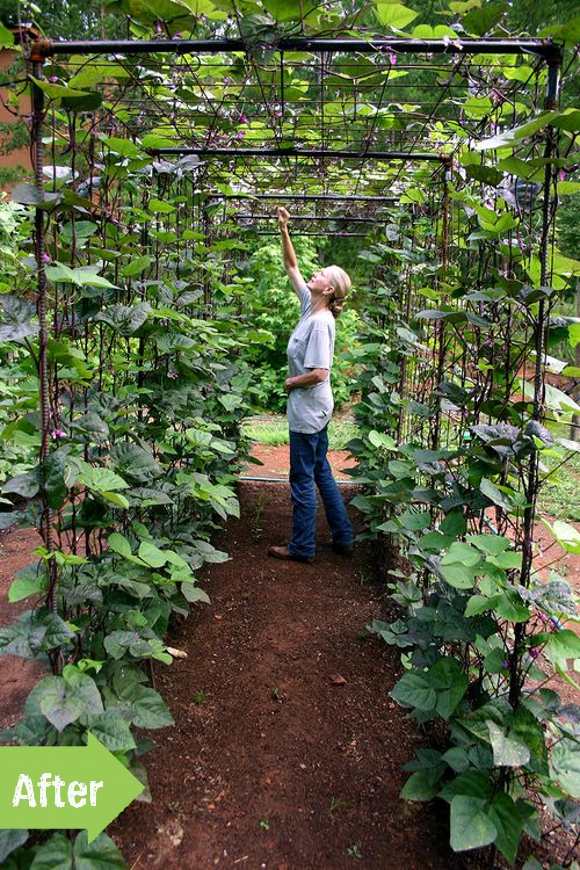 Before & After: April's Bean Tunnel