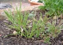 Eliminar de una vez las hierbas