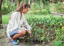 Insecticidas verdes para tus plantas 2